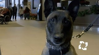Hospital Security: A Dog's Perspective