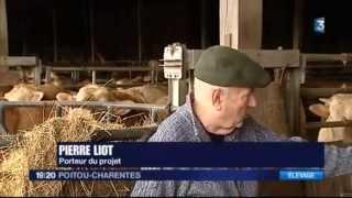 Projet d'une ferme de 1200 taurillons à Coussay-les-Bois (86)