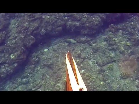 Hawaii Spearfishing | Shooting BIG Invasive Species, Goatfish, And More! | Part 1