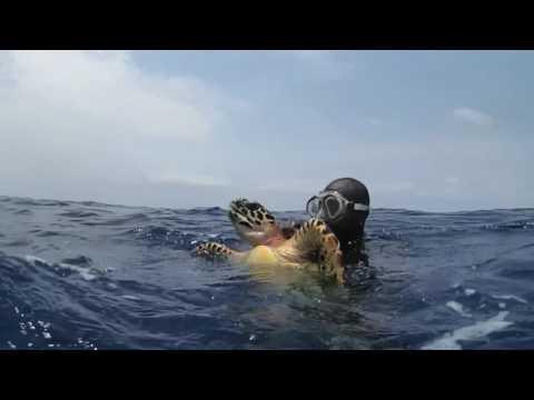Hawksbill Sea Turtle Recovery | WCS Belize