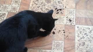 Положение отчаянное: коты играют с пакетиком чайным😄