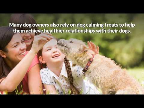 are-dog-calming-treats-safe-and-which-brand-is-best