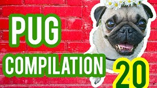 Pug Compilation 20 - Funny Dogs but only Pug Videos | Instapugs