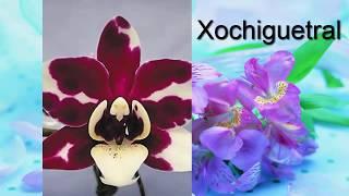 Орхидея. Каталог орхидей фаленопсис. Часть 5. Находите своих красавиц!