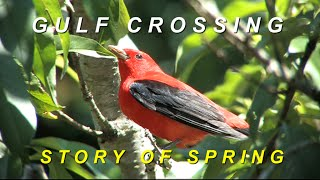 Gulf Crossing: Story of Spring thumbnail