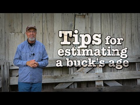 12 Tips for Aging Bucks When Deer Hunting: It's Not Just Antler Size!