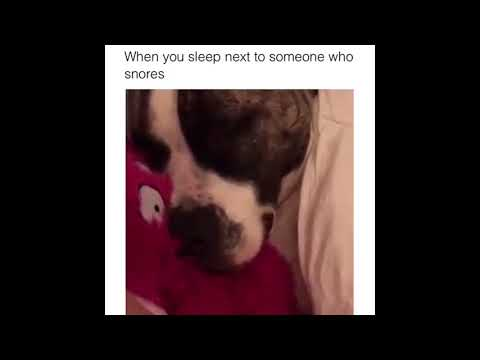 How a dog snore? funny dog snoring