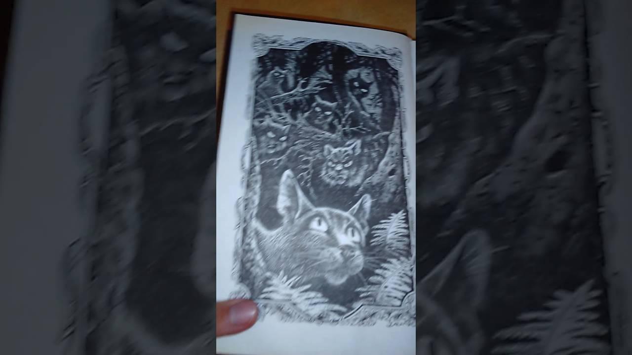 Голоса в ночи коты-воители