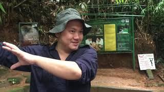 Save Gibbons Save Wildlife. Ag…