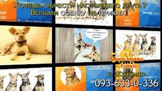 """Мини приют """"Лучик"""" для собак г. Житомир"""