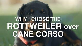 WHY I CHOSE ROTTWEILER OVER CANE CORSO