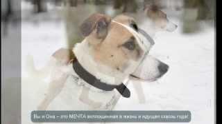 Абби - собака в хорошие руки
