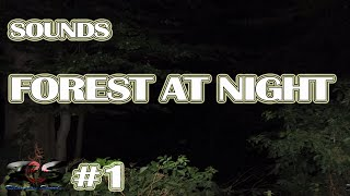 8 Hours Forest Night Sounds | Relaxing Sleep Sounds-Without Music | Nature Relaxation Sounds