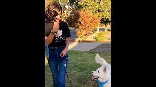 HOW TO traing your dog to not pull on leash! *Positive Dog Training