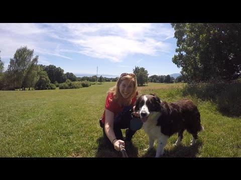Dog-sitting in Neuchatel, Switzerland | CK