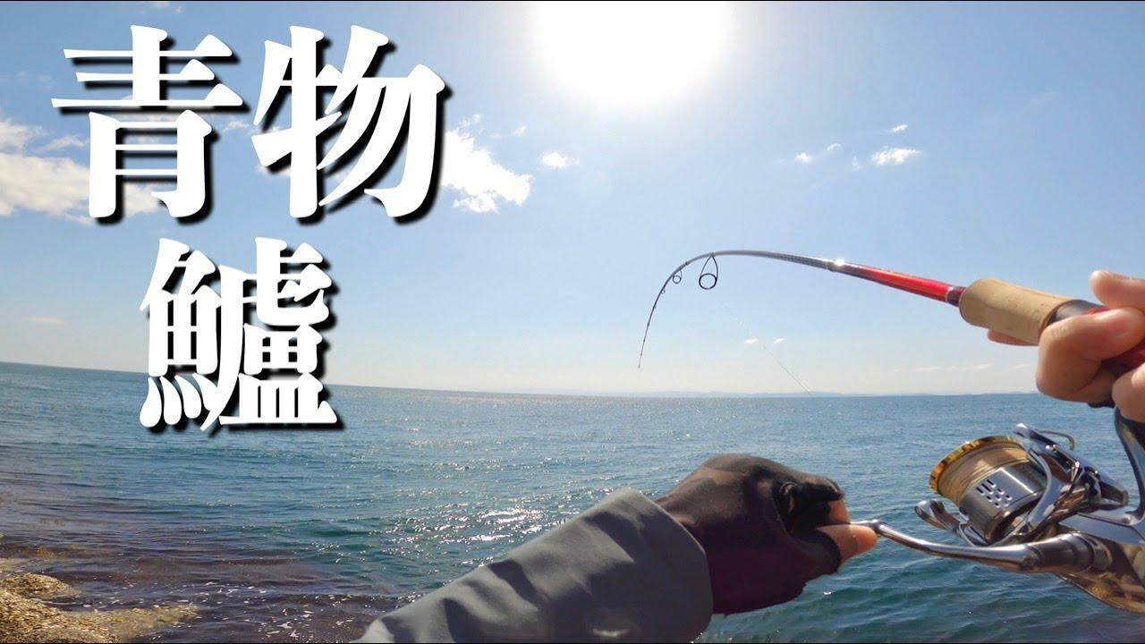妻「美味しい魚釣ってきて」と言われたのでショアジギ初心者が青物とシーバスを狙う!!!
