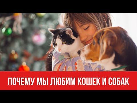 Почему мы любим кошек и собак || Юрий Прокопенко