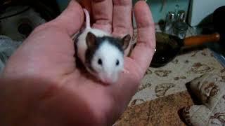 Уборка у мышей