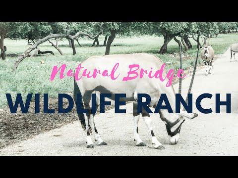 African Safari * Texas Style