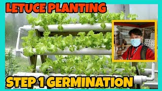 LETUCE PLANTING STEP-1 GERMINATION STAGE
