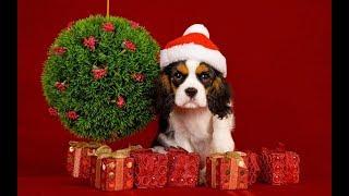С Новым Годом 2018! Годом собаки! Самое красивое поздравление