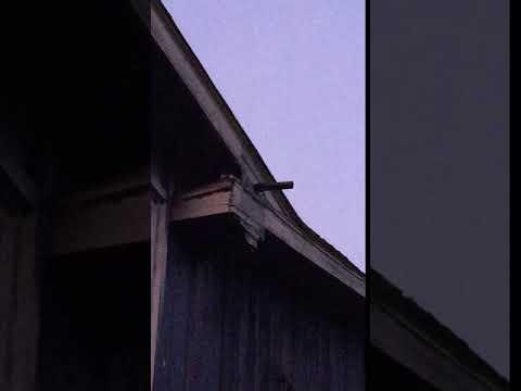 One-way bat door in action! www.batremovalmich.com