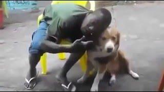 негра укусила собака прикол