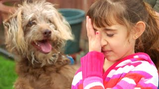 What To Do When Kids Are Afraid Of Dogs | Lucky Dog