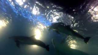 Уникальные видео кадры рождения дельфиненка в Одесском дельфинарии НЕМО