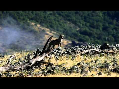 The vultures in Eastern Rhodopes