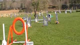 Irish Dog Agility Training Round The Patch Ni
