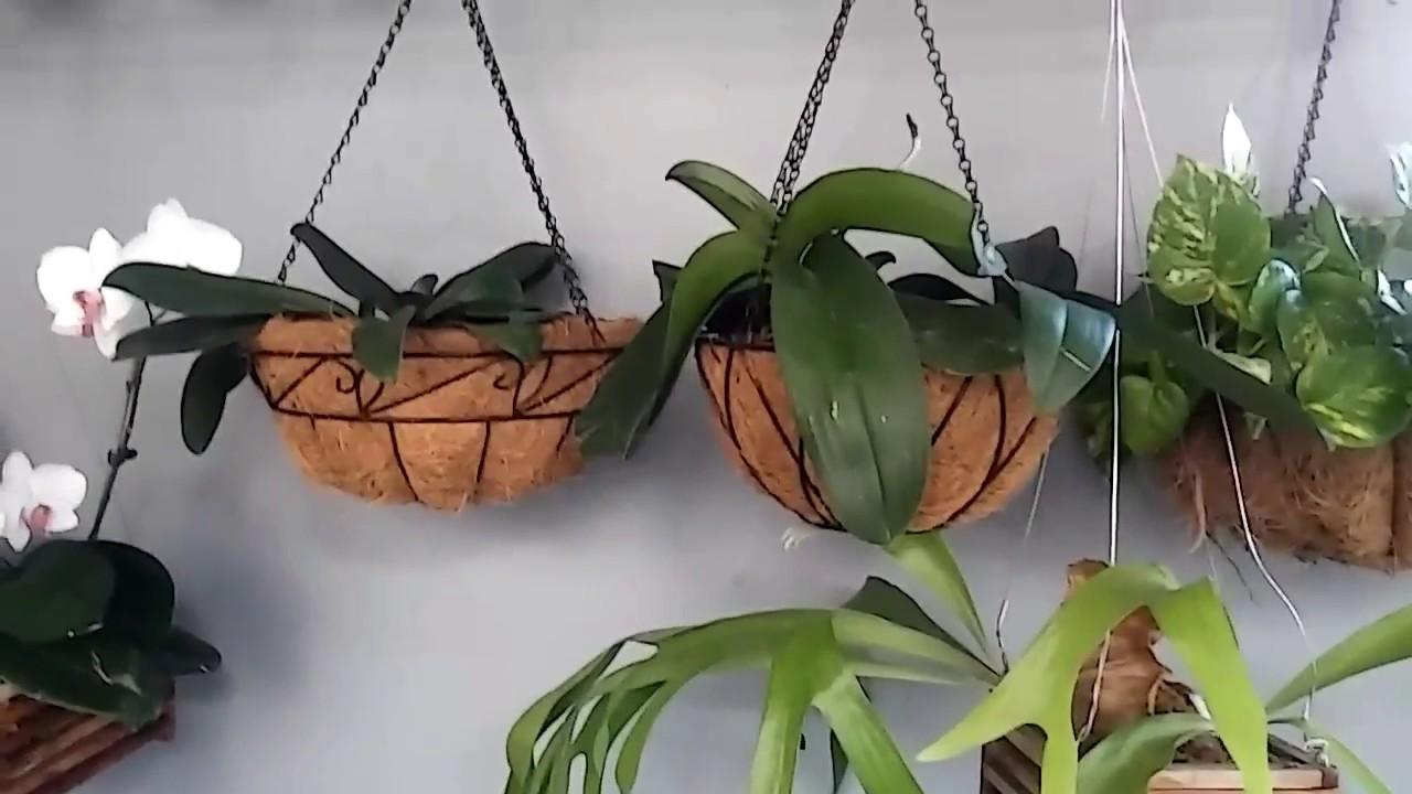 Proteje del sol directo a tus orquideas y plantas de - Plantas de sol directo ...