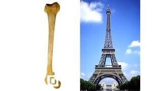 Did You Know The Eiffel Tower Was Inspired By Your Femur?