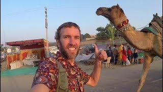 INDIA IS MIND-BLOWING! Visiting the Incredible Pushkar Camel Fair