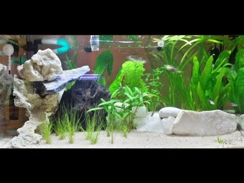 Allestimento acquario dolce tropicale 60 litri semplice e for Arredo acquario acqua dolce