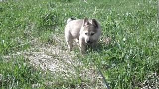 Град #щенок ищет хозяев