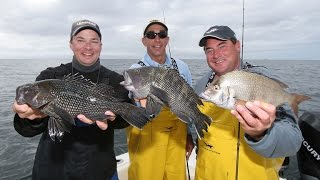 Sea Bass Fishing - Niantic, CT