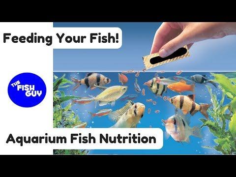 Aquarium Fish Nutrition