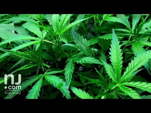 Will marijuana become legal in N.J. under Phil Murphy?