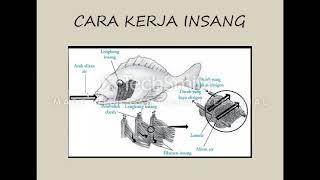 Sistem Pernapasan Pada Ikan Cute766