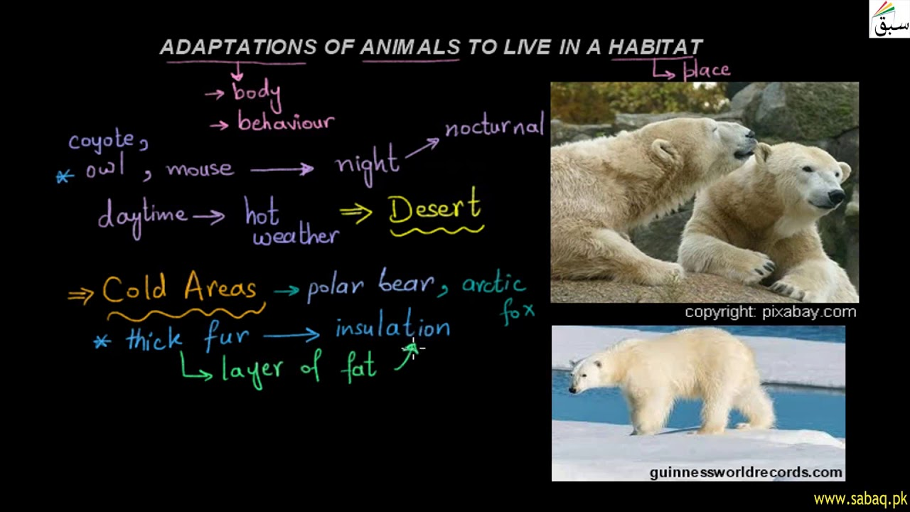 what animals adapt to survive