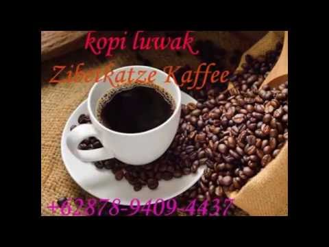 most expensive coffee in the world,most expensive coffee beans,kopi luwak animal