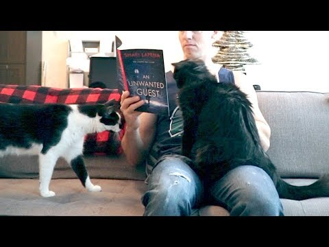 Trying To Read With Cats Around