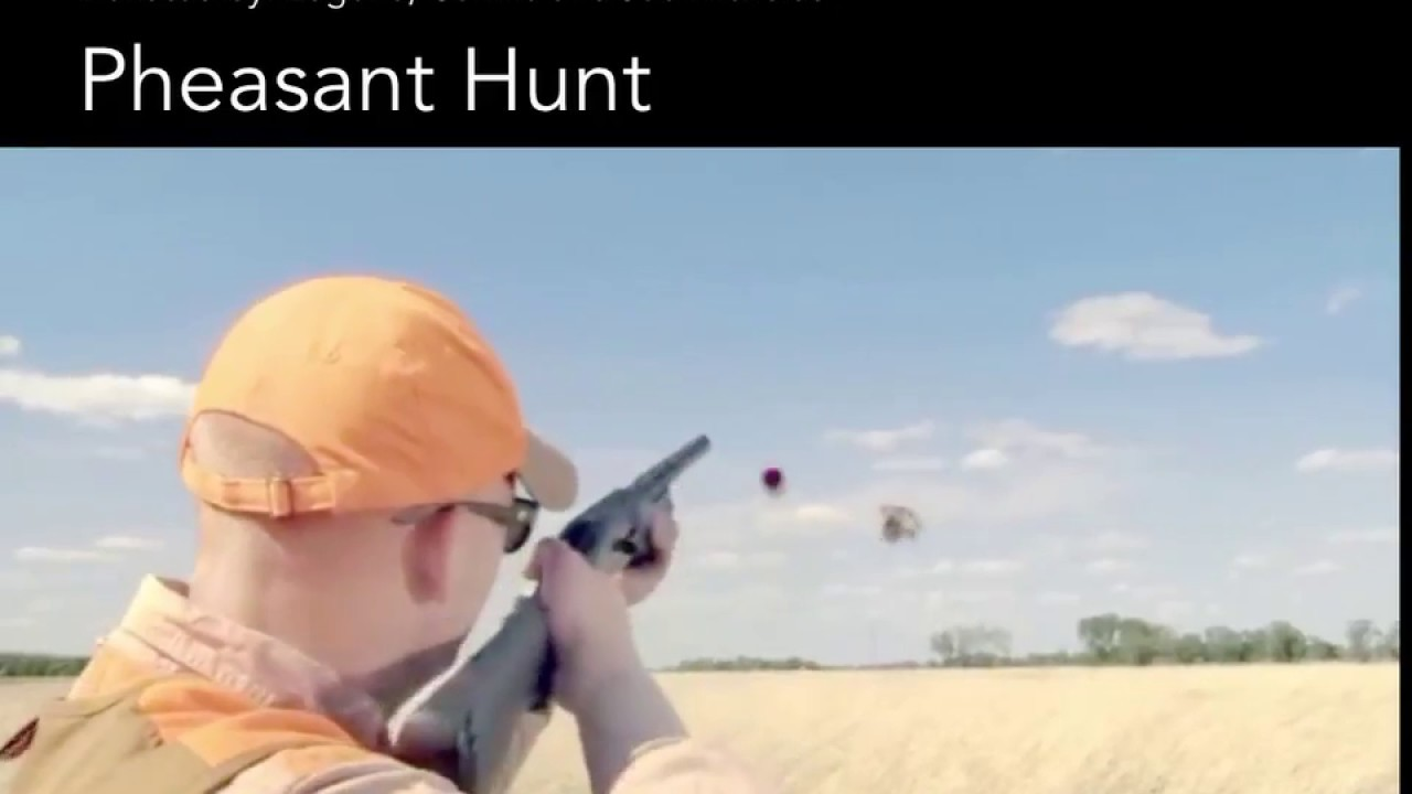 Sneak Peek Pheasant Hunt - YouTube