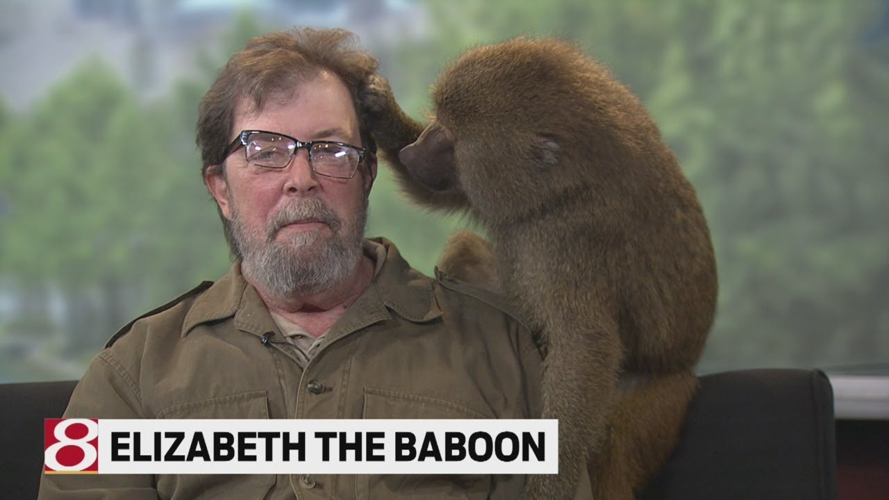 (VIDEO) The Animal Guy's most memorable TV moments