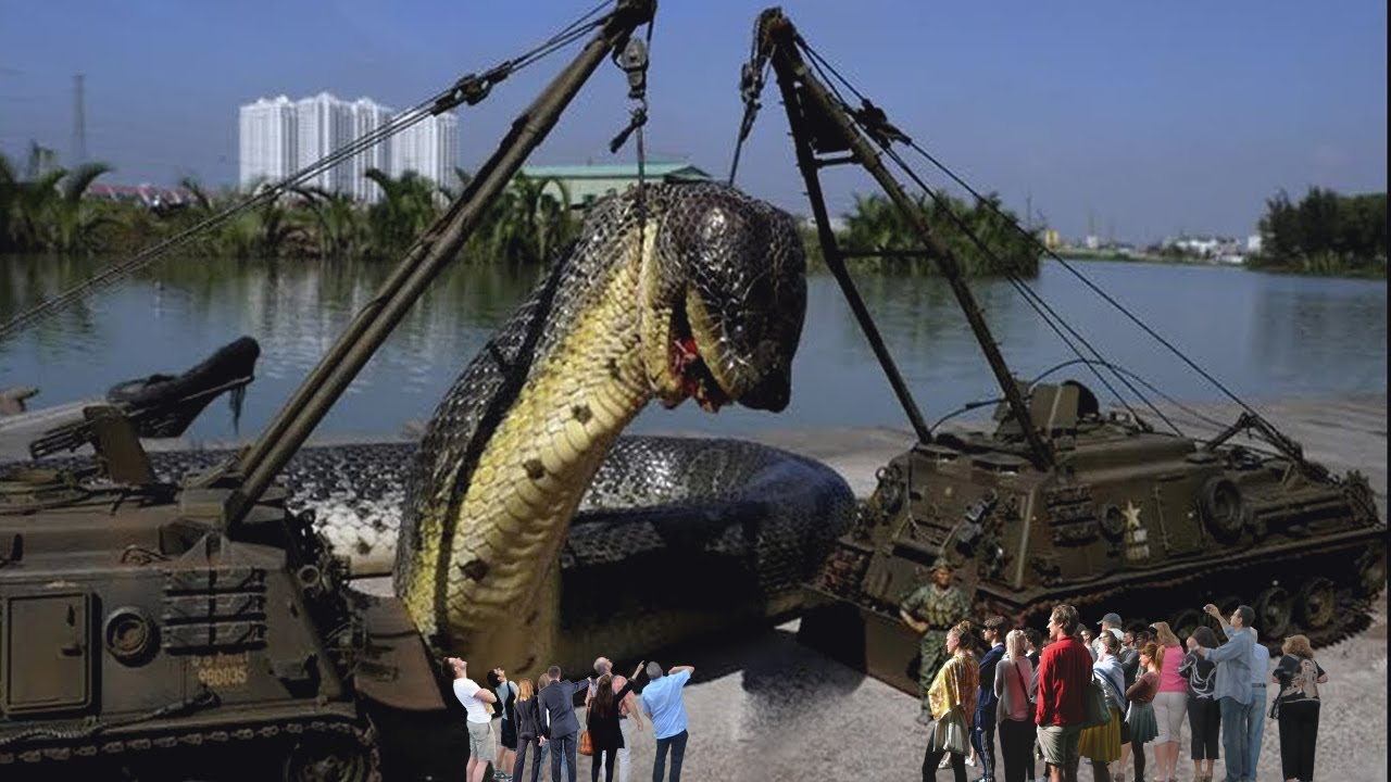 Download 7 Biggest Snakes Ever Caught On Camera