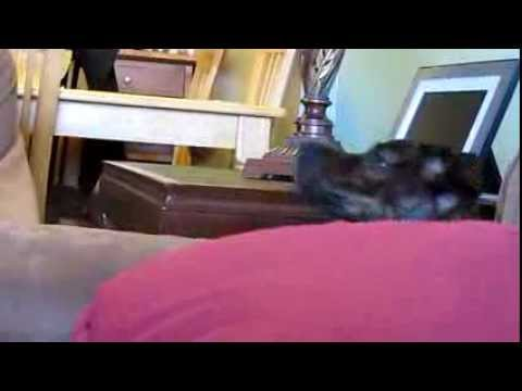 Dog Howling At House Phone (Ringtone/Dogtone)