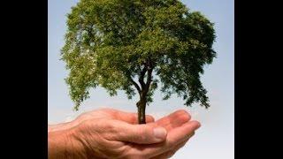 (1) Planter er ligesom alle andre levende ting på jorden. De optager ilt og afgiver CO2!