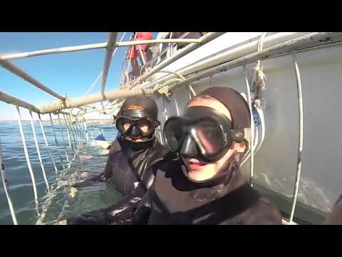 Shark Cage Diving - Mosselbay, South Africa