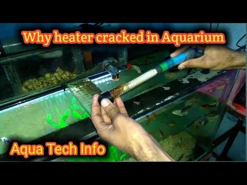 #65. Why Aquarium Heater Cracked In Aquarium?